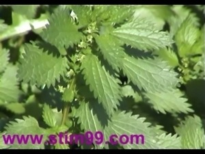 Heavy Nettles self Torture Nipples & Pussy stinging Nettle free